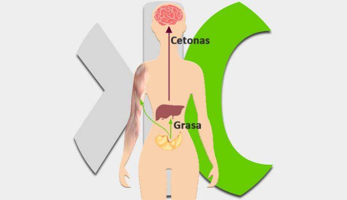 Imagen recorrido o comportamiento de la cetosis en sangre.