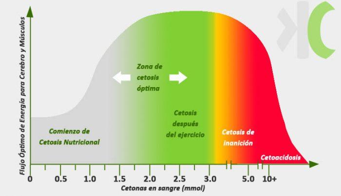 Gráfrica del flujo óptimo de energía para cerebro y músculos, cetosis, hígado