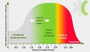 Gráfrica del flujo óptimo de energía para cerebro y músculos, cetósis, hígado